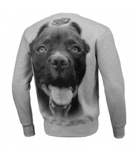 Bluza Pit Bull West Coast model IR szara