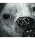 Koszulka Pit Bull West Coast model California Dog 17 czarna